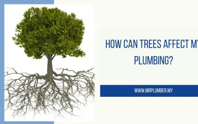 How Can Trees Affect My Plumbing?