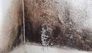 mold plumbing